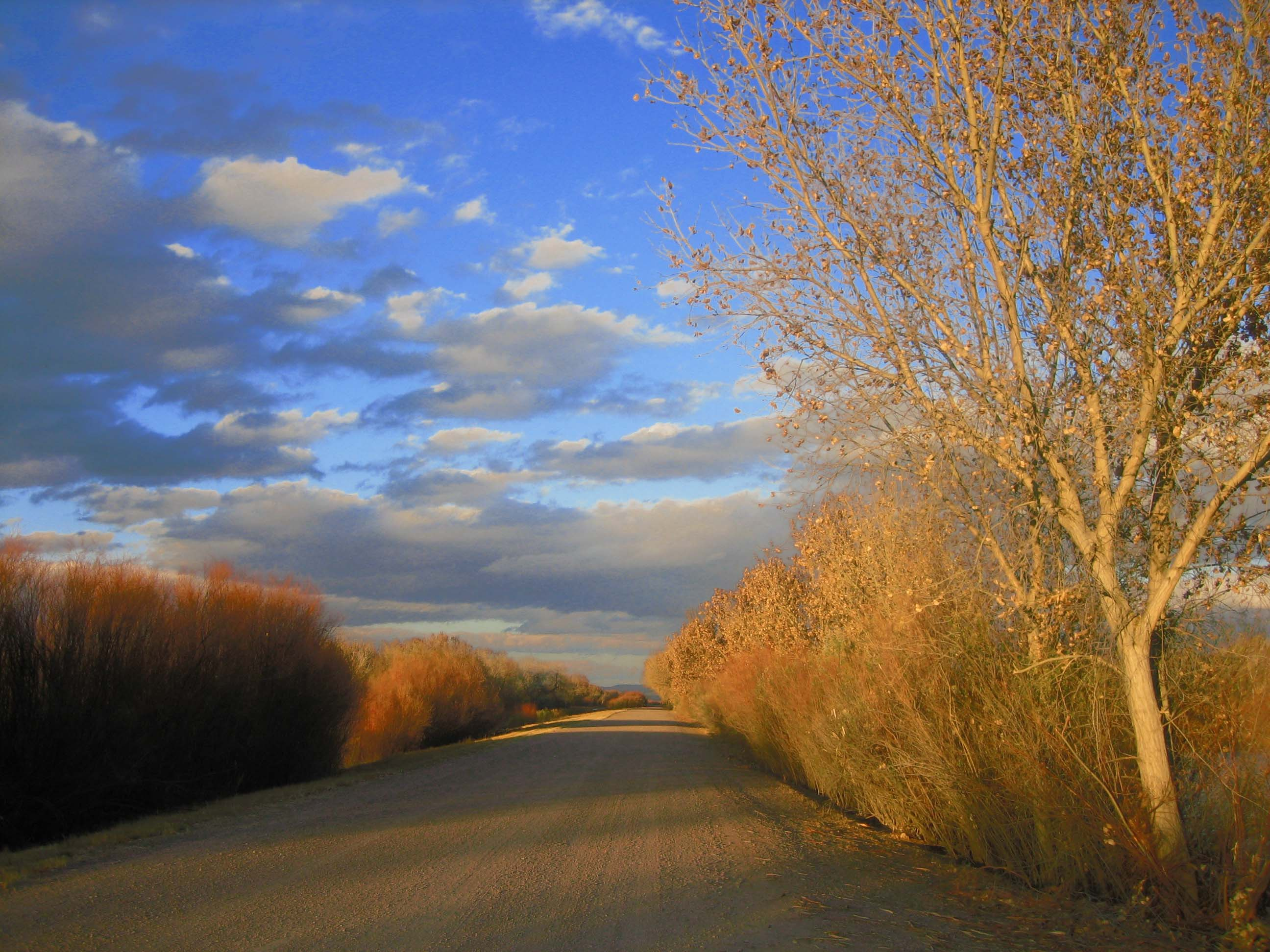 Bosque del Apache road