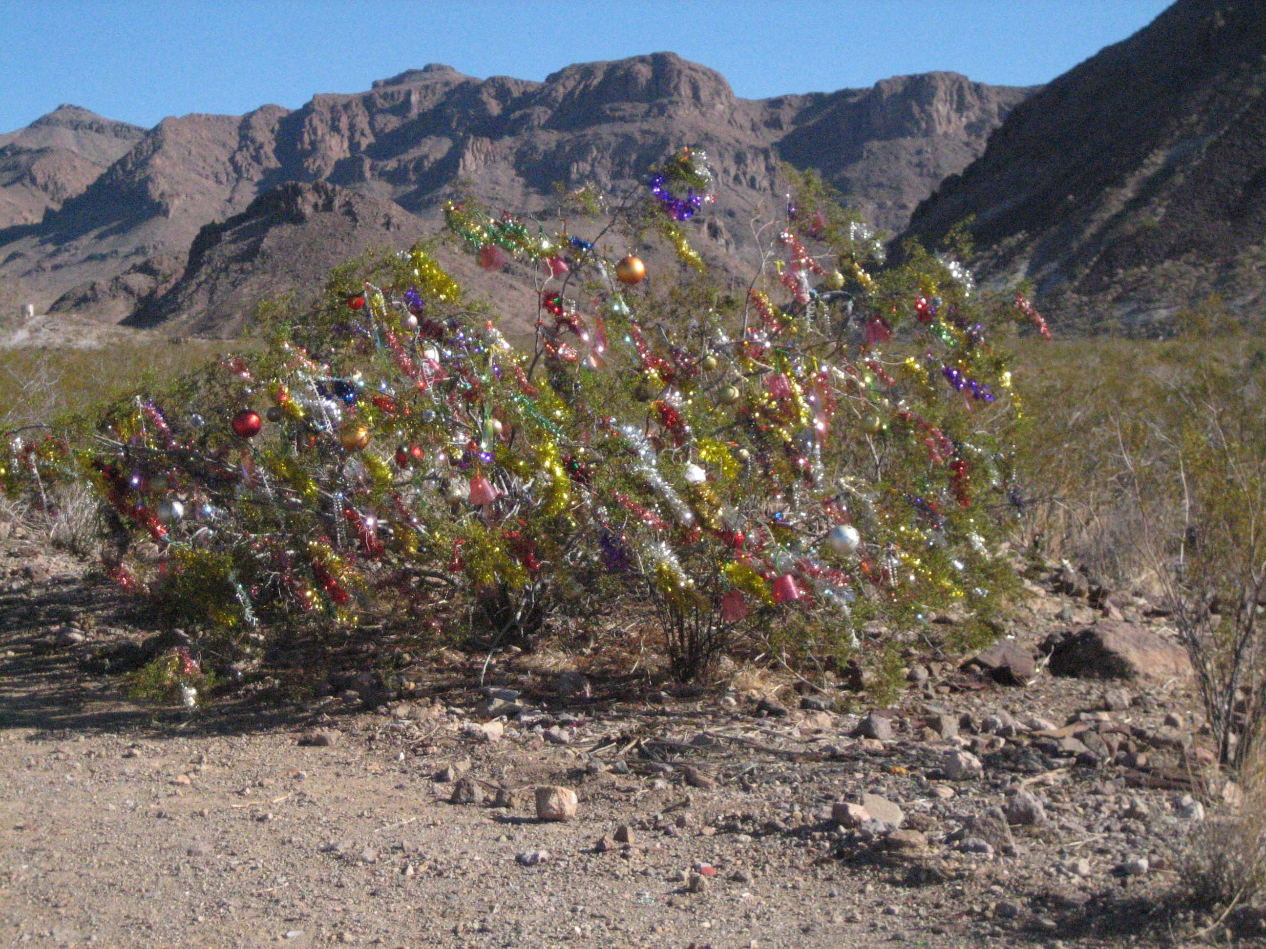 Christmas bush outside of Oatman